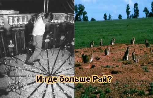 Вселенная 25 — это мышиный Ад или почему есть кроличий Рай?